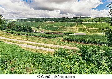 Grape lands in France