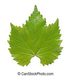 Grape leaf isolated on white background