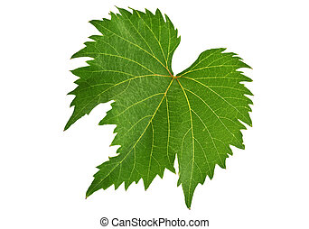 Grape Leaf on the white background