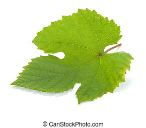 Grape leaf. Isolated on white background