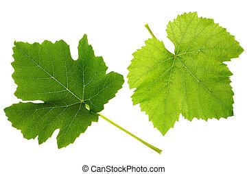 Grape leaf - Grape green leaf isolated on white background