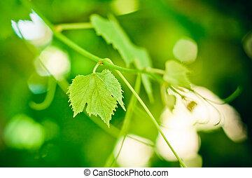 Grape leaf over defocused grapes
