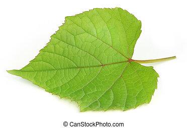 Grape leaf over white background