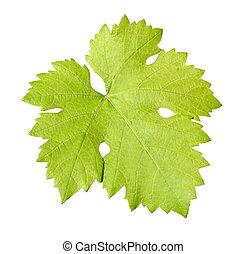 Grape leaf - Fresh grape leaf close up isolated on a white...
