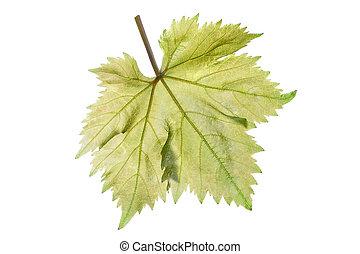 Grape leaf - Single perfect beautiful grape leaf and stem...