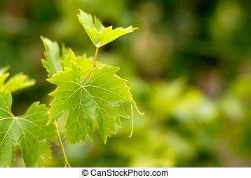 Grape leaf over de-focused grapes