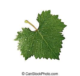 grape leaf