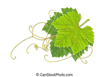 Grape leaves 02 - Grape leaves composite with path