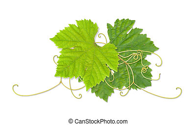 Grape leaves 03 - Grape leaves composite with path