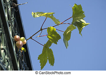Grape leaves growing on forging iron