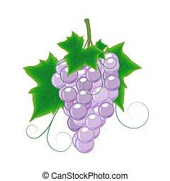 grape of blue grapes