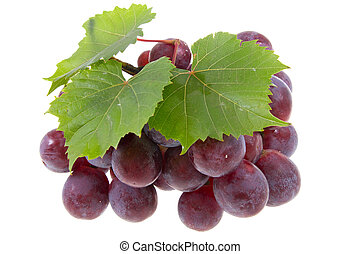 grape on isolated