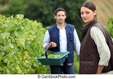 Grape pickers