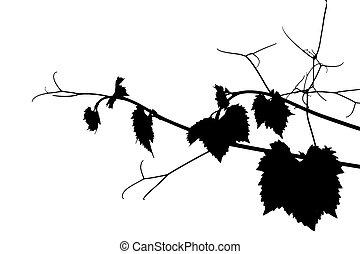 Grape silhouette - BW grape silhouette