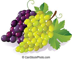 grape - ripe grape bunch