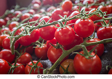 Grape Tomatoes Vine - Fresh organic grape tomatoes on the...
