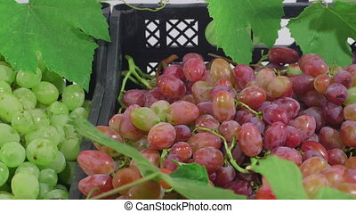 Grape varieties in the boxes