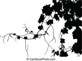 Grape Vine - A textured grape vine vectorized. 1/2 of copy...
