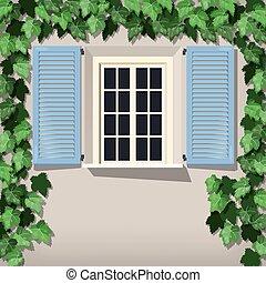 Grape vine and window
