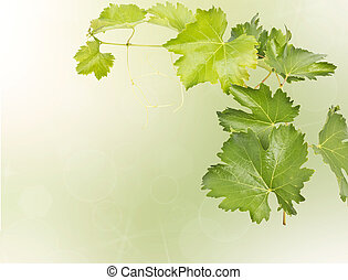 grape vine isolated on bokeh background