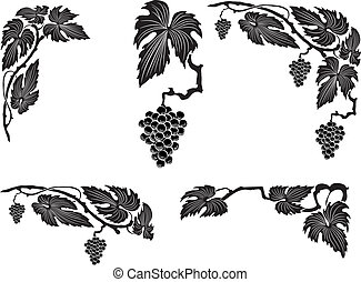 Grape vine - vector illustration grape vine