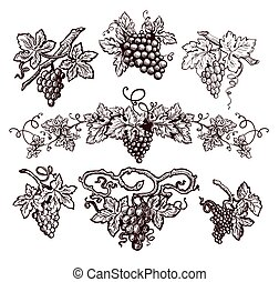 Grape vine vintage vector sketch icons for wine production or winemaking winery
