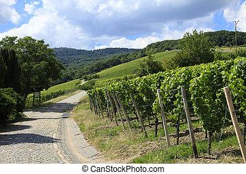 Grape vines Germany