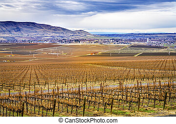 Grape Vines Rows Winter Vineyards Red Mountain Benton City ...