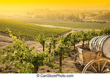 Grape Vineyard with Old Barrel Carriage Wagon - Grape ...