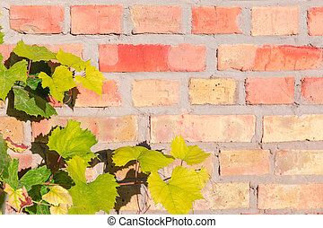 Grapes branches on blurred background of old red bricks wall