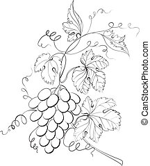 Grapes engraving. Vector illustration.