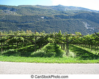 Grapes everywhere - This was made in Dro, Italy, near Riva ...
