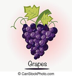 Grapes fruit vector illustration.