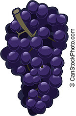 Grapes - Illustration of purple grapes on white background -...