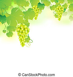 illustration of bunch grape hanging from grapevine