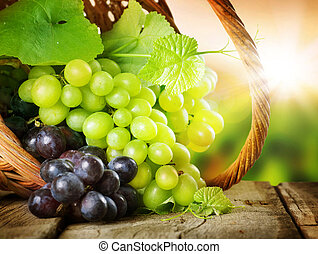 Grapes In The Basket. Grapevine Over Vineyard Background