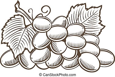 Grapes in vintage style. Line art vector illustration
