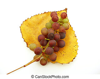 grapes on leaf