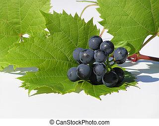 grapes on leaf