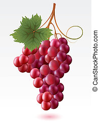 Grapes - Red grapes with green leaf on a white background