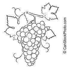 grapes Sketch.