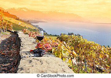 grapes., suíça, vinho, lavaux, região