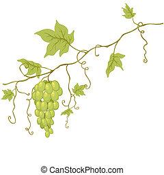 grapes., vektor, grön