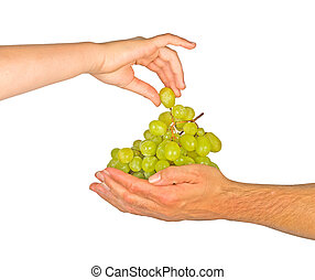 Grapevine as a gift of agriculture