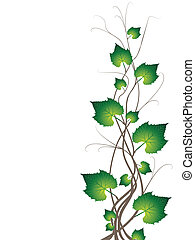 Vector illustration representing grapevine branches and leaves isolated on white.