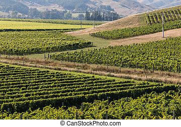 New Zealand vineyards in summer