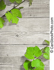 grapevine on wooden background