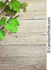 grapevine on a wooden background - grapevine on wooden ...