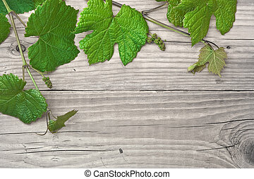 grapevine on a wooden background