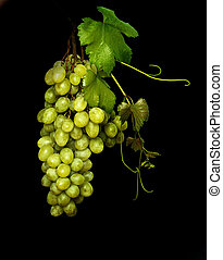 Grapevine on black background